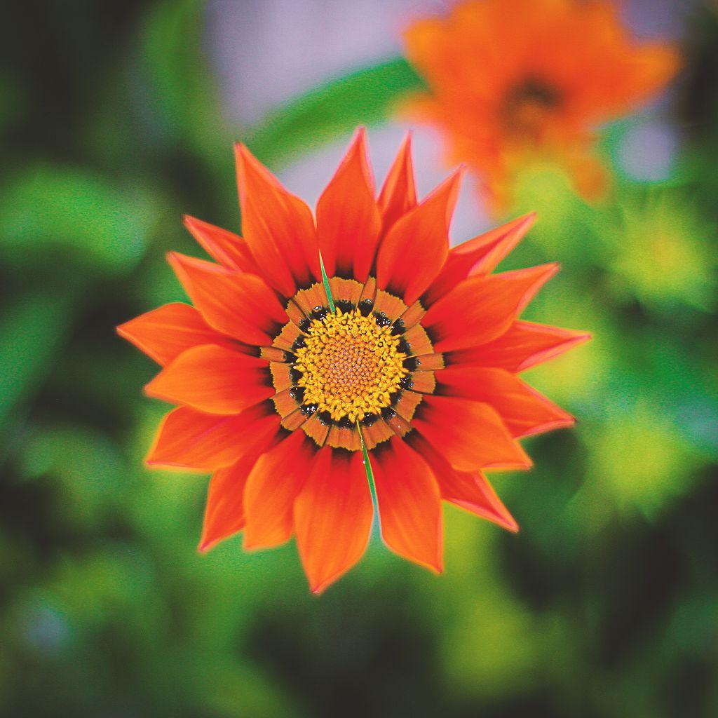 Bain Malaisien De Fleurs Exotiques Rose Des Sables